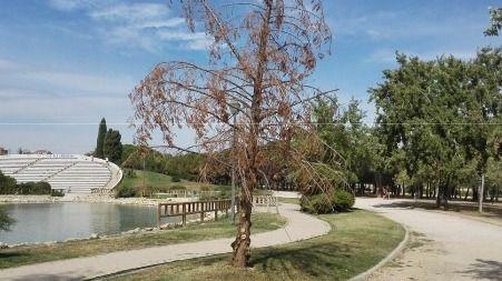 Árbol en mal estado en el Parque de las Cruces.