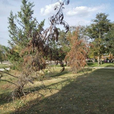 Cruces de madera para los árboles del parque que lleva su nombre
