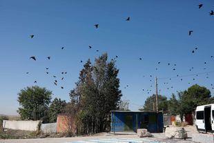 Una bandada de pájaros provenientes de los vertederos cercanos sobrevuela el sector 6.