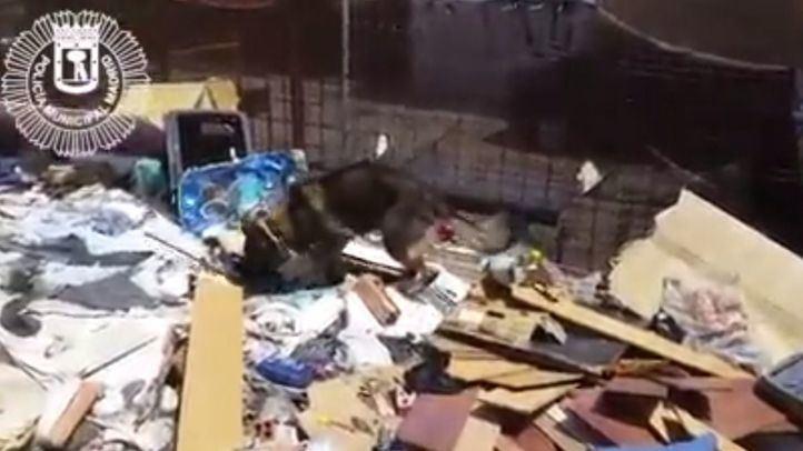 Un perro de la unidad canina registra la parcela en busca de droga.