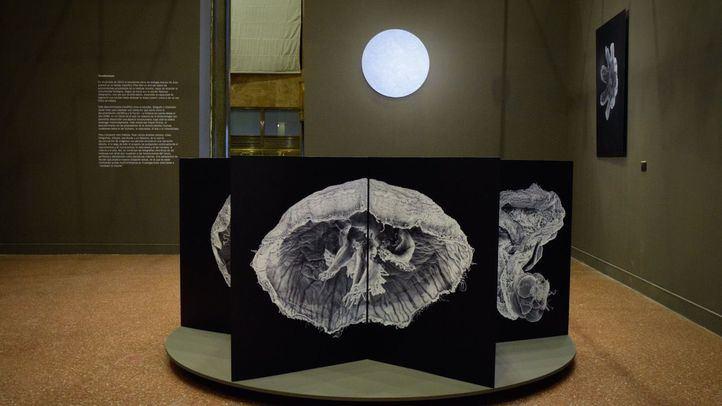Exposición en el Instituto Cervantes de ''Evolucionarios''.