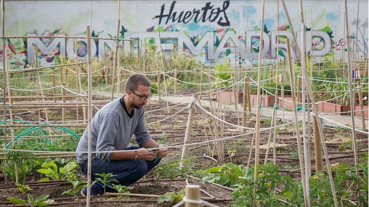 Huertos Montemadrid: cultive un ocio saludable a un paso del centro de Madrid