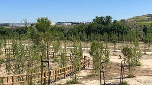 Una parcela de 13,5 hectáreas se convierte en un sumidero de CO2 junto al río Manzanares