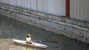 Una persona practica remo junto a la pared del canal de Madrid Río mientras dos gallinetas están posadas en la pared del canal.