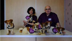 Un seguro de vida: perros que avisan de las bajadas y subidas de azúcar
