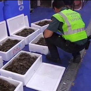 Interceptados 80 kilos de cangrejo chino invasor en el polígono Cobo Calleja