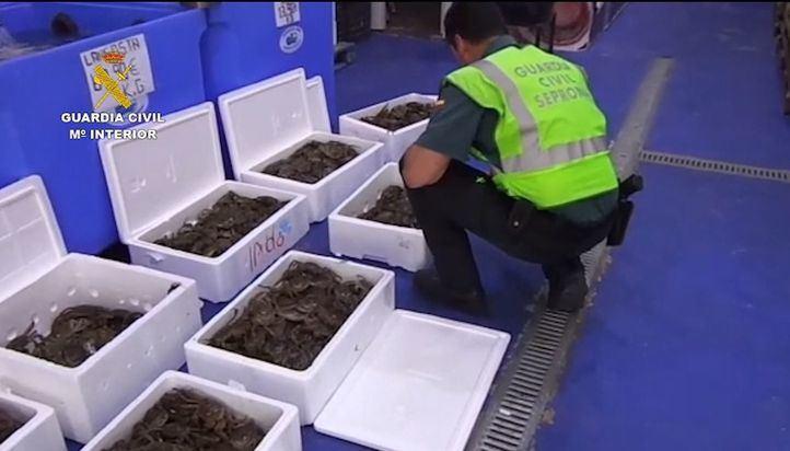 Interceptados 80 kilos de cangrejos chinos en Cobo Calleja.