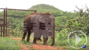 Una nueva vida para los elefantes maltratados