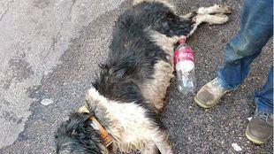 Fallece un can tras ser encerrado en el coche por su dueño a pleno sol.