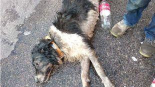 Fallece un perro encerrado en un coche en 'Fuenla'