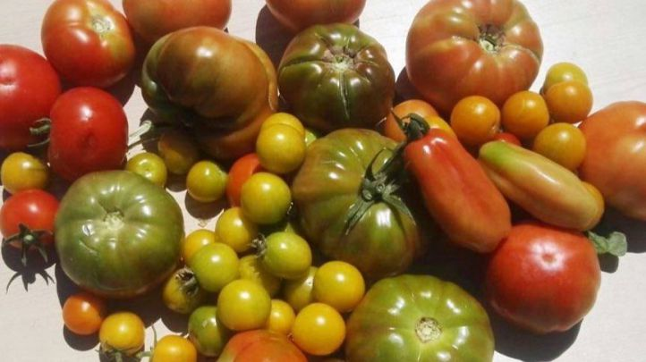 Cata de 10 variedades de tomate