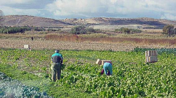 La medida facilitará el relevo generacional en zonas rurales, según ATA.