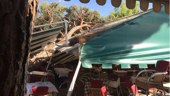 Un árbol de grandes dimensiones cae sobre la carpa de un restaurante.