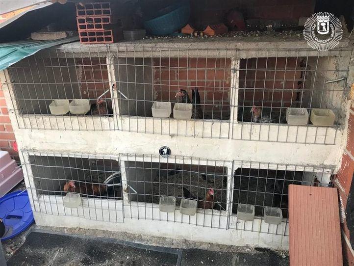 Rescatados 18 'gallos de pelea' de un criadero ilegal de Villaverde