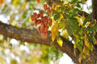 La luna de otoño ilumina los planes del 'finde'