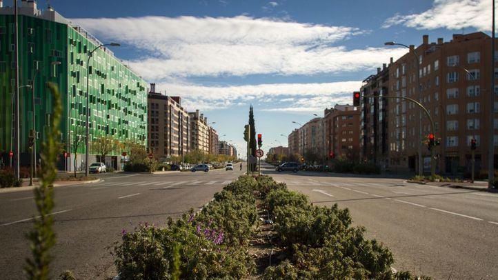 Jardineras centrales de la avenida del Ensanche de Vallecas.