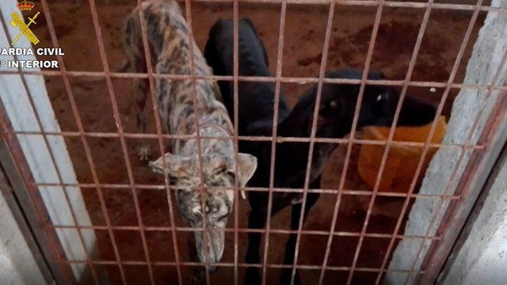 Rescatados 28 perros en pésimas condiciones, sin comida ni agua, en Villamanta