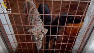 De los 28 perros rescatados en la perrera ilegal de Villamanta, 26 eran galgos