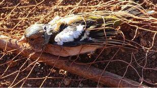 Madrid suspende la caza de pájaros cantores