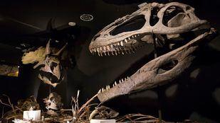 Fósiles milenarios en 'Dinopétrea'