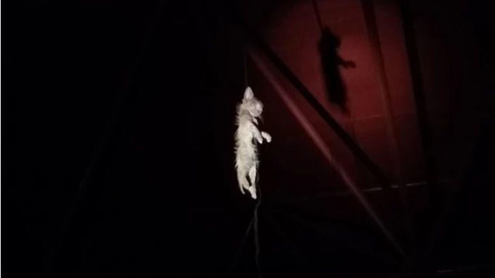 Cadáver del felino hallado en Villa de Vallecas.