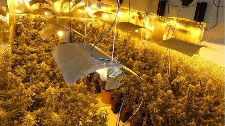 Plantación de marihuana en una imagen de archivo.