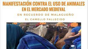 Alcalá se manifestará este domingo por un Mercado Cervantino sin animales