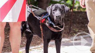 Un paseo a favor de los perros guía para invidentes