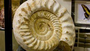 Regresa la feria de los minerales y fósiles