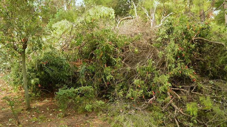 Árboles y ramas caídas.