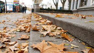 La acumulación excesiva de hojas entraña problemas de limpieza y de seguridad.
