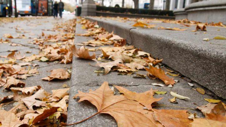 ¿Por qué se acumulan las hojas en Madrid?