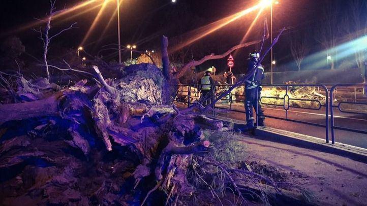 Efectivos de los bomberos de la Comunidad de Madrid retiran de la vía el árbol caído.