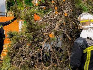 El viento provoca un centenar de incidencias, sobre todo en el noroeste