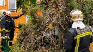 La mayoría de las incidencias han tenido que ver con caídas de árboles o ramas y averías
