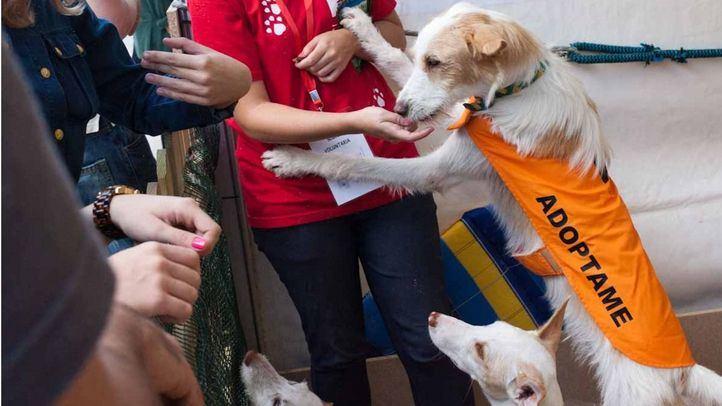Salón de adopción de mascotas de la Comunidad de Madrid, en foto de archivo.
