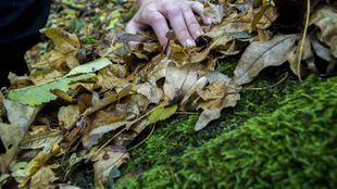 El musgo es una de las especies protegidas en la Comunidad.