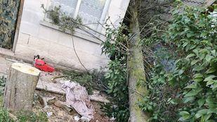 El suceso ha tenido lugar mientras la víctima cortaba el árbol.