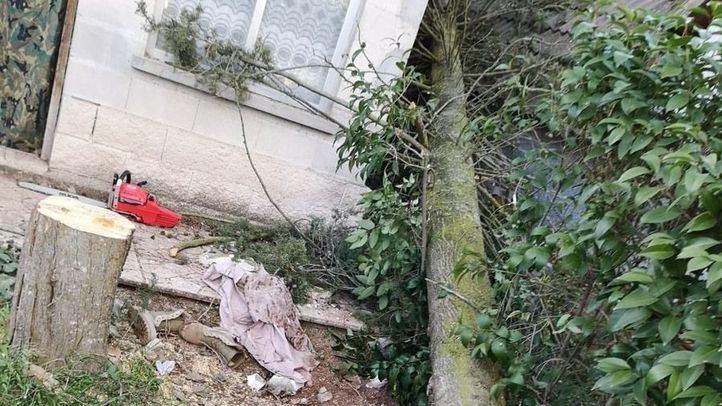 Herido grave por la caída de un árbol en Nuevo Baztán