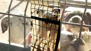 Perros del Centro de Protección Animal de Parla.