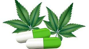 Conociendo más sobre los beneficios que aporta al organismo la marihuana CBD