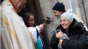 Como cada 17 de enero para celebrar al patrón de los animales, San Antonio Abad, se han congragado a las puertas de la iglesia gestionada por el padre Ángel cientos de madrileños con sus mascotas. Este año el pregón ha corrido a cargo de Eva Amaral y en el mismo ha estado presente la alcaldesa de Madrid, Manuela Carmena.