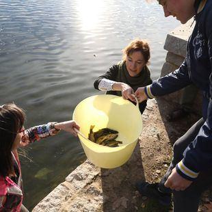 Nuevos inquilinos en la Casa de Campo: 2.000 tencas repoblarán el lago