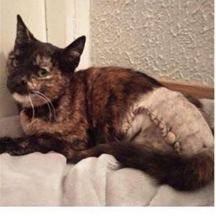 Un gato de seis meses, herido con perdigones en 'Sanse'