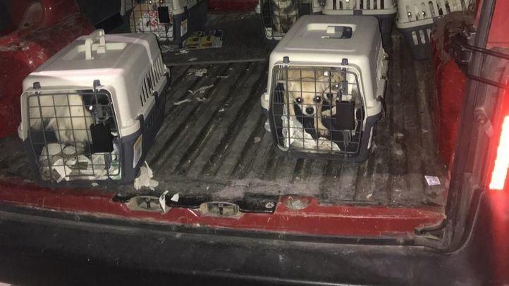 12 perros han sido rescatados de este criadero ilegal.