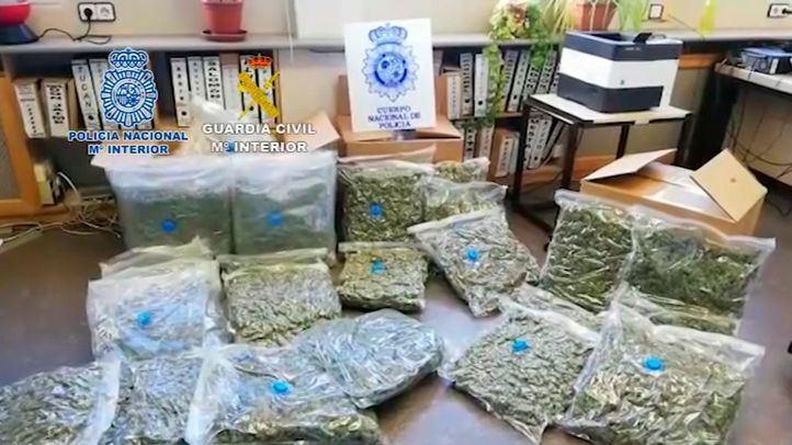 En la operación, se han incautado 10.500 plantas y 250 kilogramos de cogollos de marihuana.