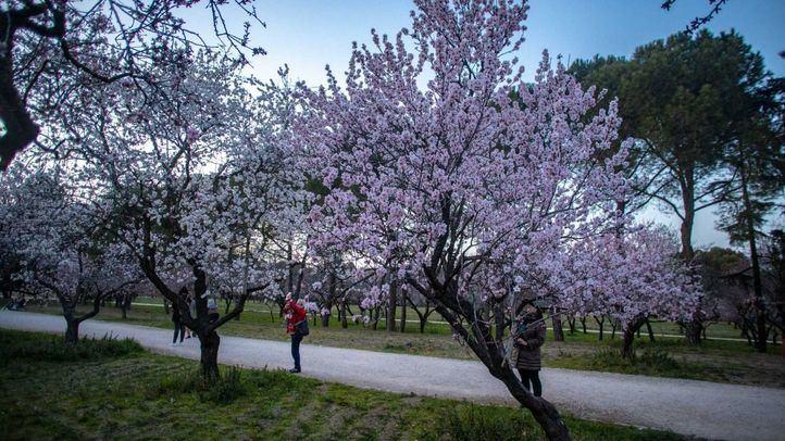 Los almendros en flor y el arte bohemio embellecen el 'finde'