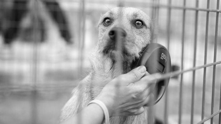 Un paso importante después del rescate es comprobar que no haya nadie buscando al perro o al animal rescatado. Lo primero es comprobar si está identificado.