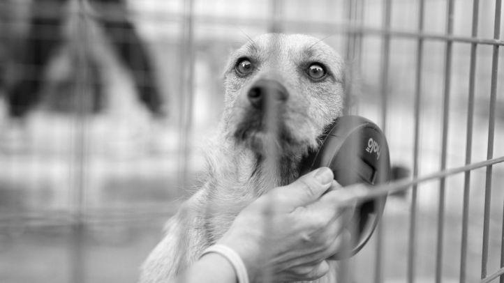 El Servicio de recogida urgente de animales ha salvado a 400 en los últimos cinco años
