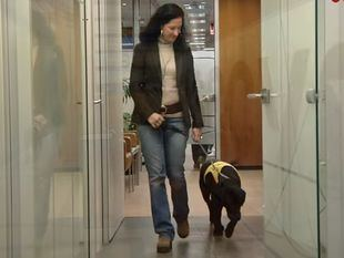 Un día con Reto: los primeros pasos de un perro de terapia